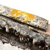 Vieille tuile avec le lichen orange Photos stock