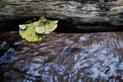 Vieille usine en bois Photographie stock libre de droits