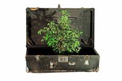 Vieille valise avec l'arbre à l'intérieur Photos stock
