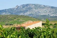 Vieille vigne chez Maury Photographie stock libre de droits