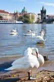 Vieille ville, rivière de Vltava, Prague (l'UNESCO), République Tchèque Images libres de droits