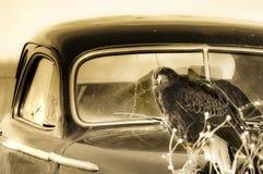 Vieille voiture avec le faucon Images stock