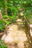Vieilles étapes en bois amenant Images stock