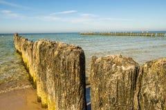 Vieilles aines en mer baltique Image libre de droits