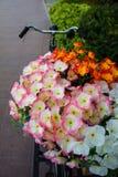 Vieilles bicyclette et fleurs Photo libre de droits