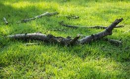 Vieilles branches Photo libre de droits