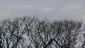 Vieilles branches et ciel gris, seul concept photo libre de droits