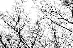Vieilles branches sur un fond blanc Image libre de droits