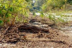 Vieilles espadrilles grises sales abandonnées au sol Photographie stock