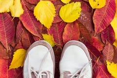 Vieilles espadrilles sur les feuilles en baisse sales colorées Image libre de droits
