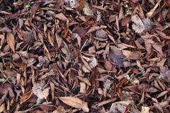 Vieilles et sèches feuilles au sol Photo libre de droits
