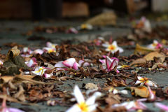 Vieilles feuilles et fleurs Image stock