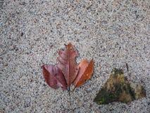 Vieilles feuilles sur la plage en Thaïlande Photos stock