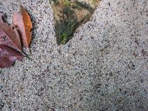 Vieilles feuilles sur la plage en Thaïlande Image stock
