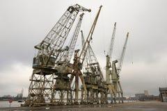 Vieilles grues dans le port d'Anvers Photographie stock libre de droits