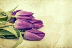 Vieilles lettres d'amour et tulipes pourpres Photo stock