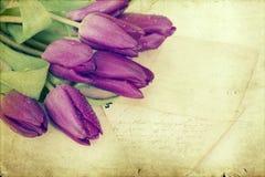 Vieilles lettres d'amour et tulipes pourpres Images libres de droits