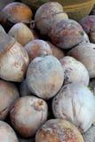Vieilles noix de coco Photo libre de droits