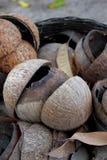 Vieilles noix de coco d'interpréteur de commandes interactif Photos libres de droits