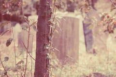 Vieilles pierres tombales dans le cimetière Image libre de droits