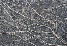 Vieilles racines d'arbre Photographie stock