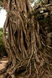 Vieilles ruines Angkor Vat Image libre de droits