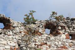 Vieilles ruines polonaises de château Images libres de droits