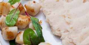 Vieiras com feijões triturados Fotografia de Stock