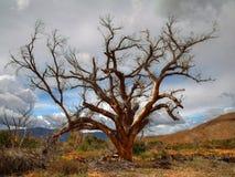 Vieja alma Fotografía de archivo libre de regalías