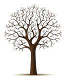 Vieja arrugada del árbol de la silueta del vector Foto de archivo