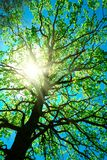 Vieja arrugada del árbol en un extracto del cielo fotografía de archivo libre de regalías