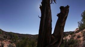 Vieja base del árbol en paisaje del desierto almacen de video