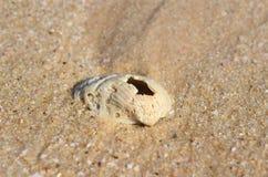 Vieja cáscara en la arena Imágenes de archivo libres de regalías