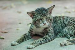 Vieja Cat Relaxing On The Floor Imagen de archivo