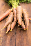 Vieja clase de zanahorias en formato vertical Fotografía de archivo