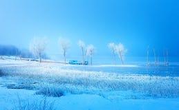 Vieja construcción del embarcadero y árboles congelados hermosos Fotografía de archivo