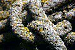 Vieja cuerda con el molde Fotografía de archivo libre de regalías