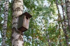 Vieja ejecución de madera de la pajarera en un árbol de abedul Imagen de archivo