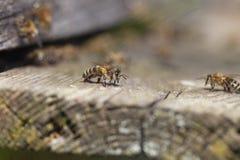 Vieja entrada de la colmena. Foto de archivo libre de regalías