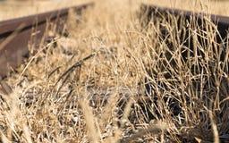 Vieja línea ferroviaria con la hierba seca larga Imágenes de archivo libres de regalías