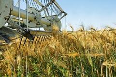 Vieja máquina segadora parada en campo de la cebada Fotografía de archivo