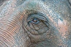Vieja macro del detalle del ojo del elefante Foto de archivo