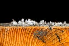 Vieja peladura de la laca de Imagen de archivo