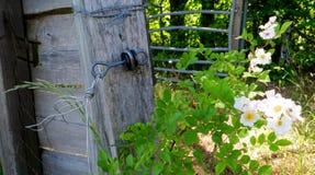 Vieja puerta de madera rodeada con las flores de Cherry Blossom Imagen de archivo libre de regalías