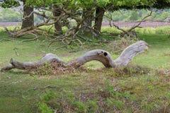 Vieja rama muerta caida Fotografía de archivo libre de regalías
