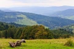 Vieja ramificación de árbol muerta contra paisaje de la montaña Fotografía de archivo libre de regalías