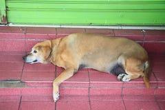 Vieja reclinación del perro Imagen de archivo libre de regalías