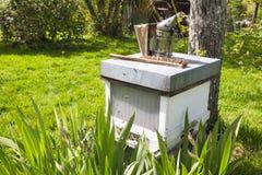Vieja situación del fumador en la colmena en abeja del jardín Al fumador es un dispositivo usado en apicultura para calmar abejas imagenes de archivo