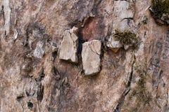 Vieja textura de la corteza de árbol Imagenes de archivo