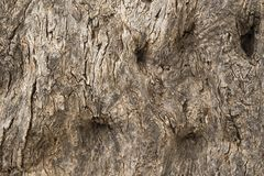 Vieja textura de la corteza de árbol El fondo de la corteza de árbol vieja Fotografía de archivo